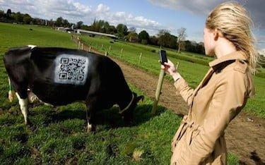 cow-qr-code_2249192k